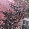 Gutter cleaning prevents roof leaks (image)