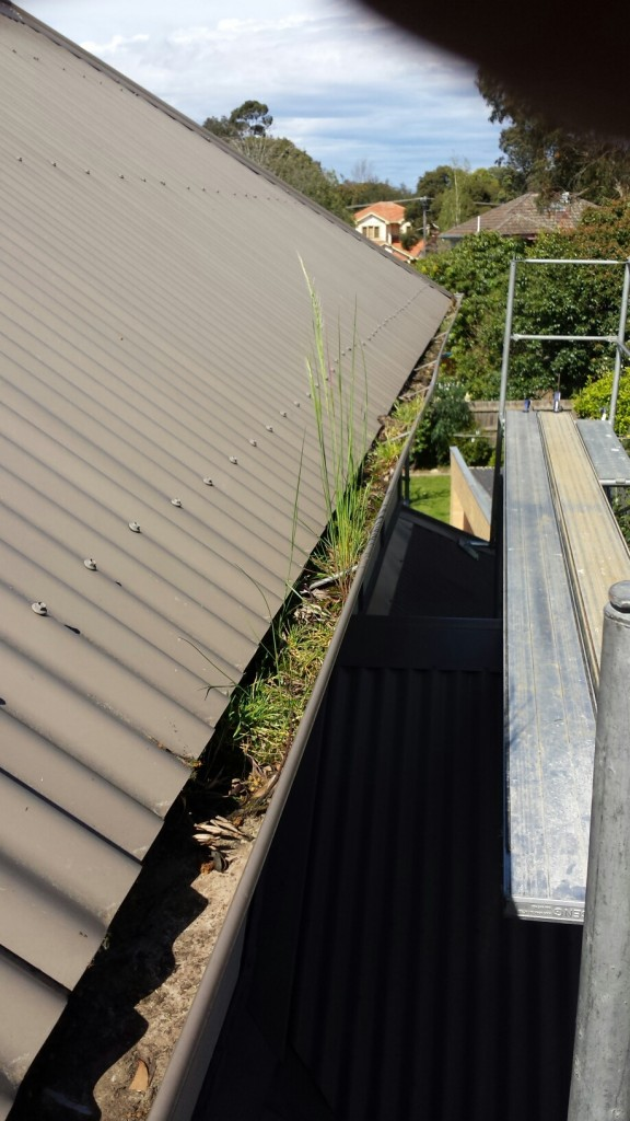 Gutter before leafguard install - Blackburn (image)