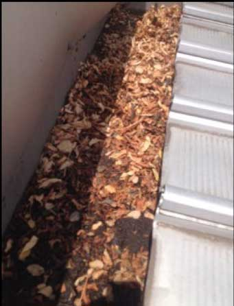 box gutter choked with leaves (image)