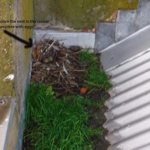 Leaking box gutters | Box Gutter Repairs | Melbourne | Roofrite